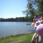 Cow on the shores of Cottonwood Lake